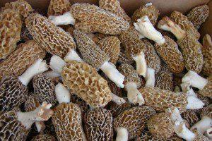Farmer's Market Friday: Mushrooms