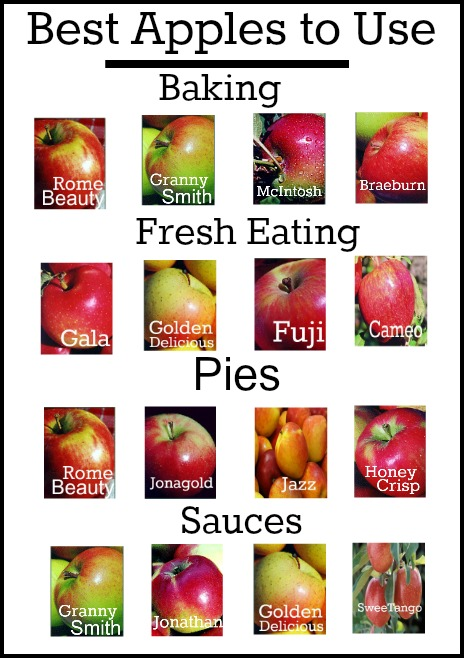 Guide to the Best Apples to Use in Cooking and Baking :: PocketChangeGourmet.com