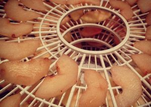 apple slices on dehydrator